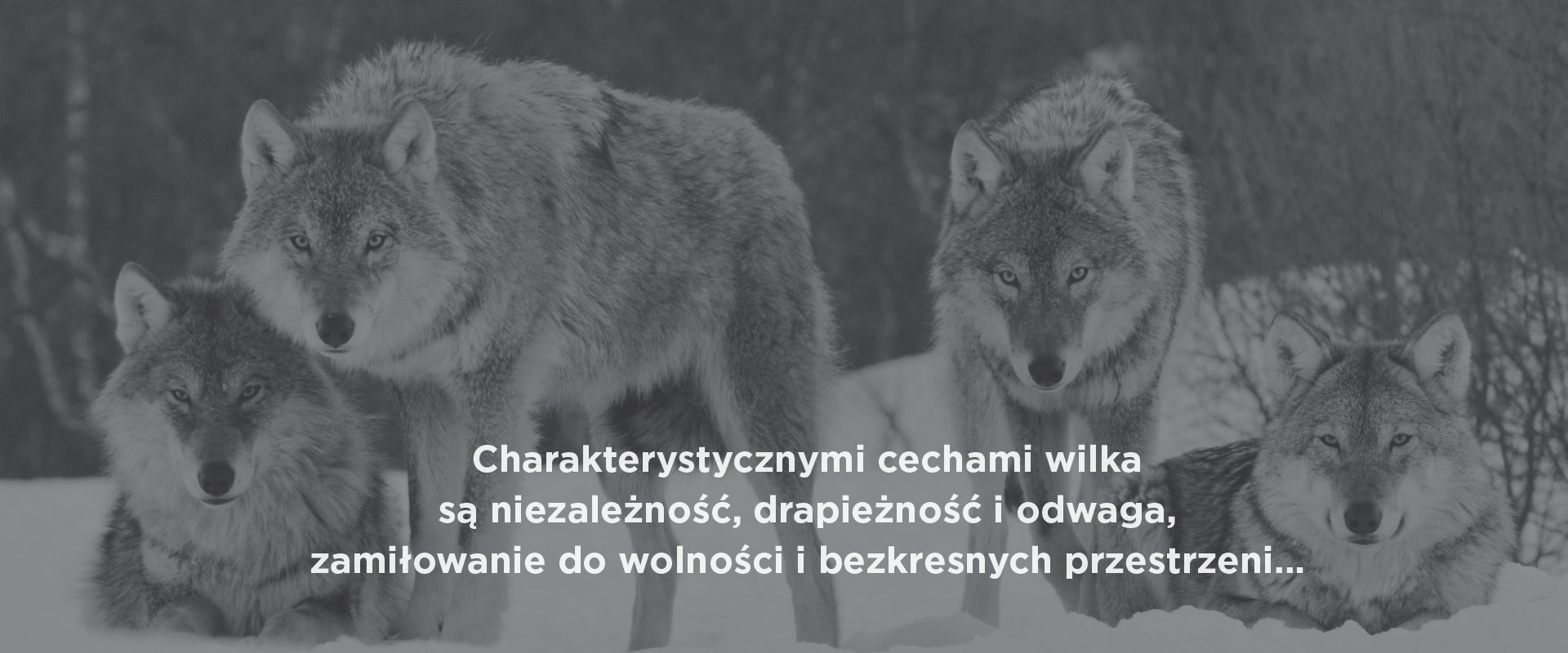 //greywolfgroup.pl/wp-content/uploads/2016/09/Wilki_1_KOREKTA.jpg